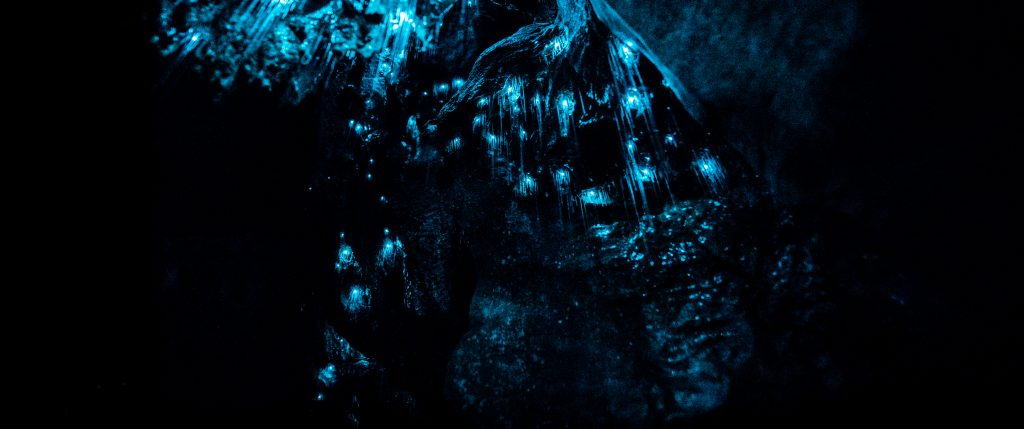 Closeup of New Zealand Glowworms in Waipu Cave